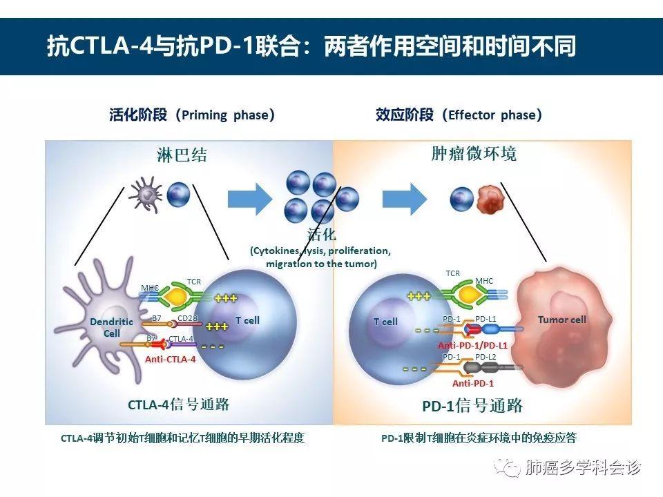 肿瘤肿瘤免疫治疗的历史和发展