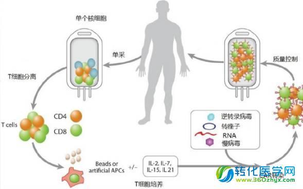 肿瘤细胞培养步骤