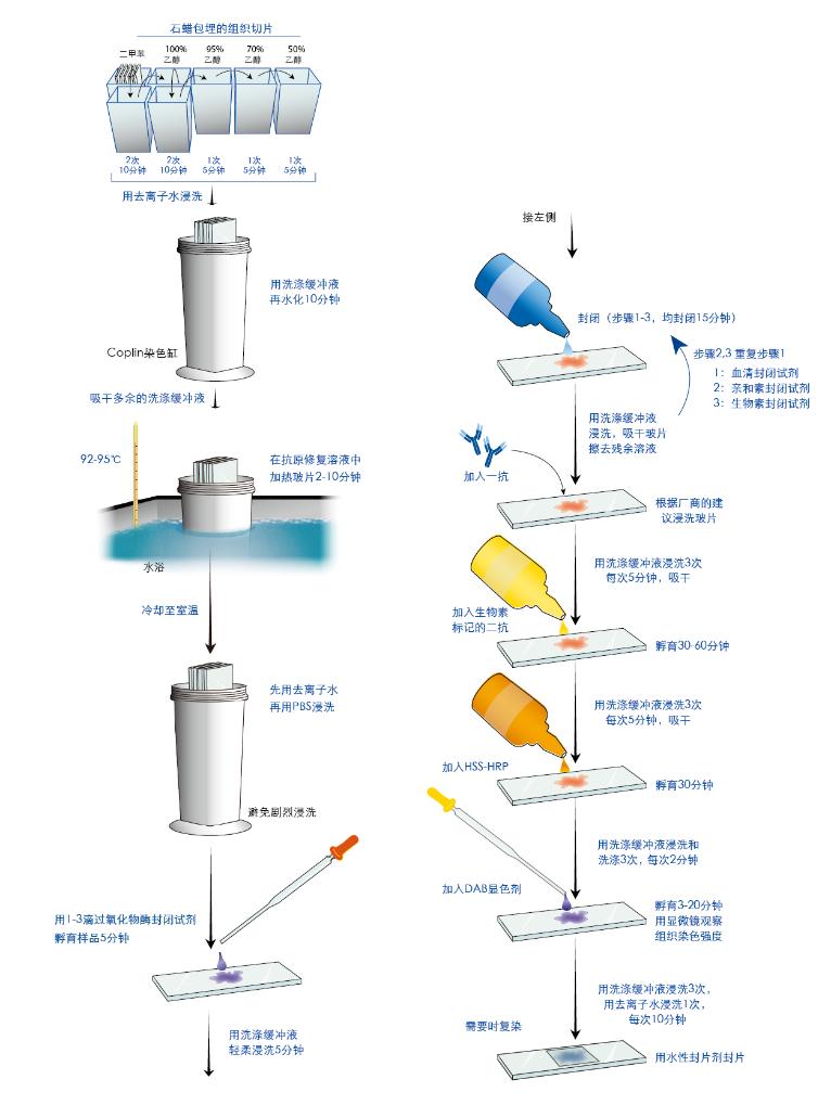抗原修复指的是恢复表位-抗体结合的技术